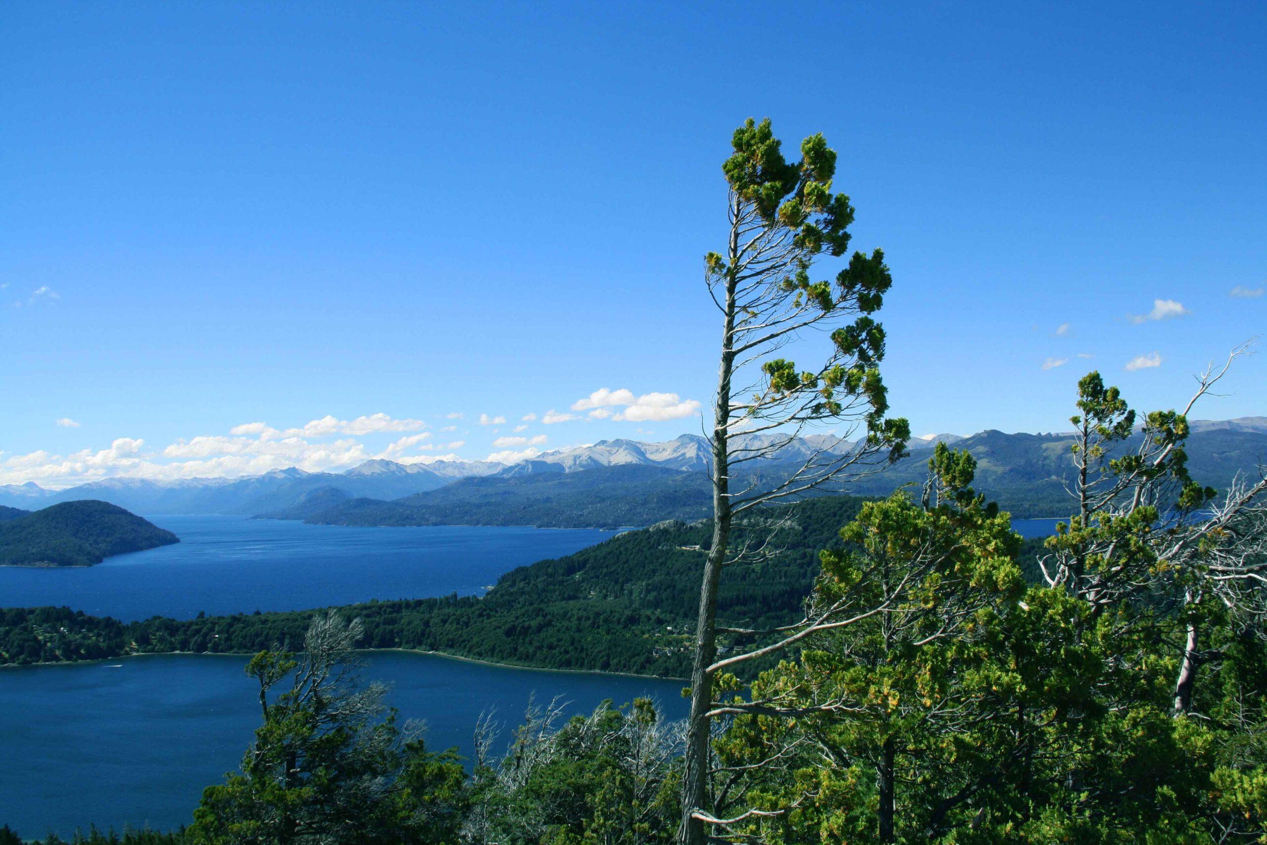 Bariloche lake view tree