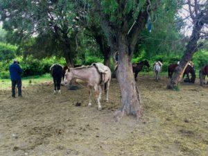 Horseback riding in Bariloche Argentina