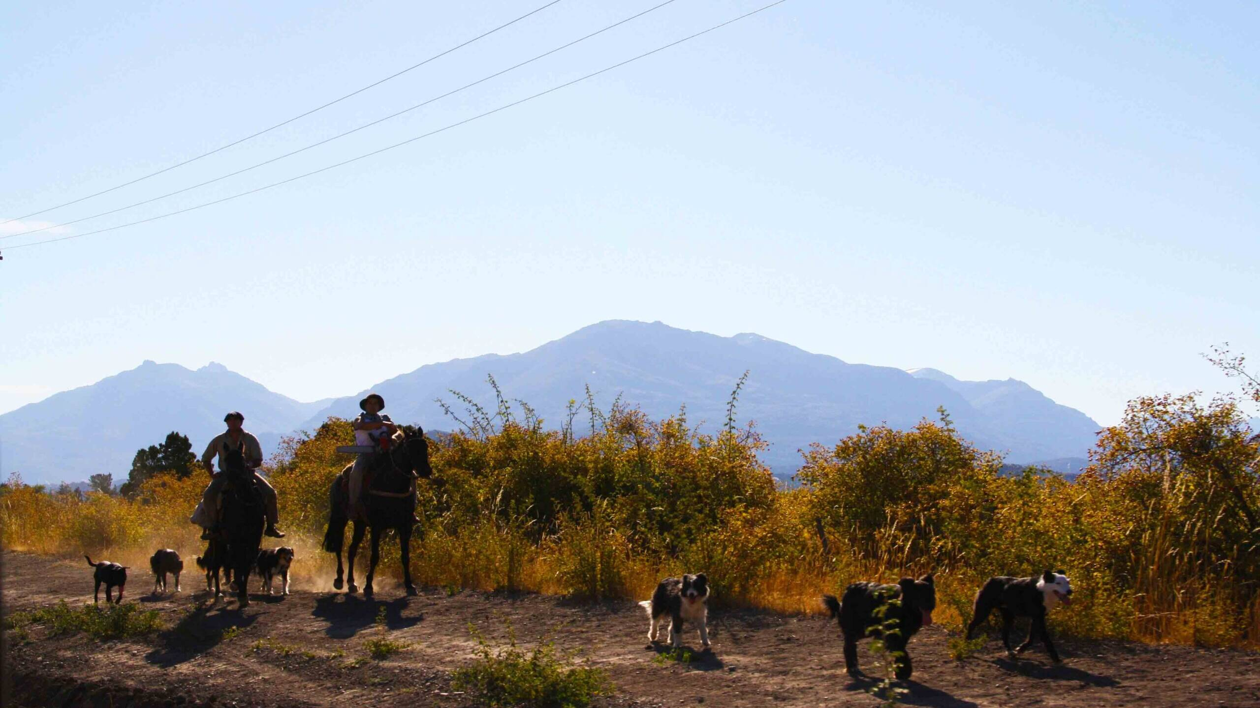 gauchos with dogs carretera austral