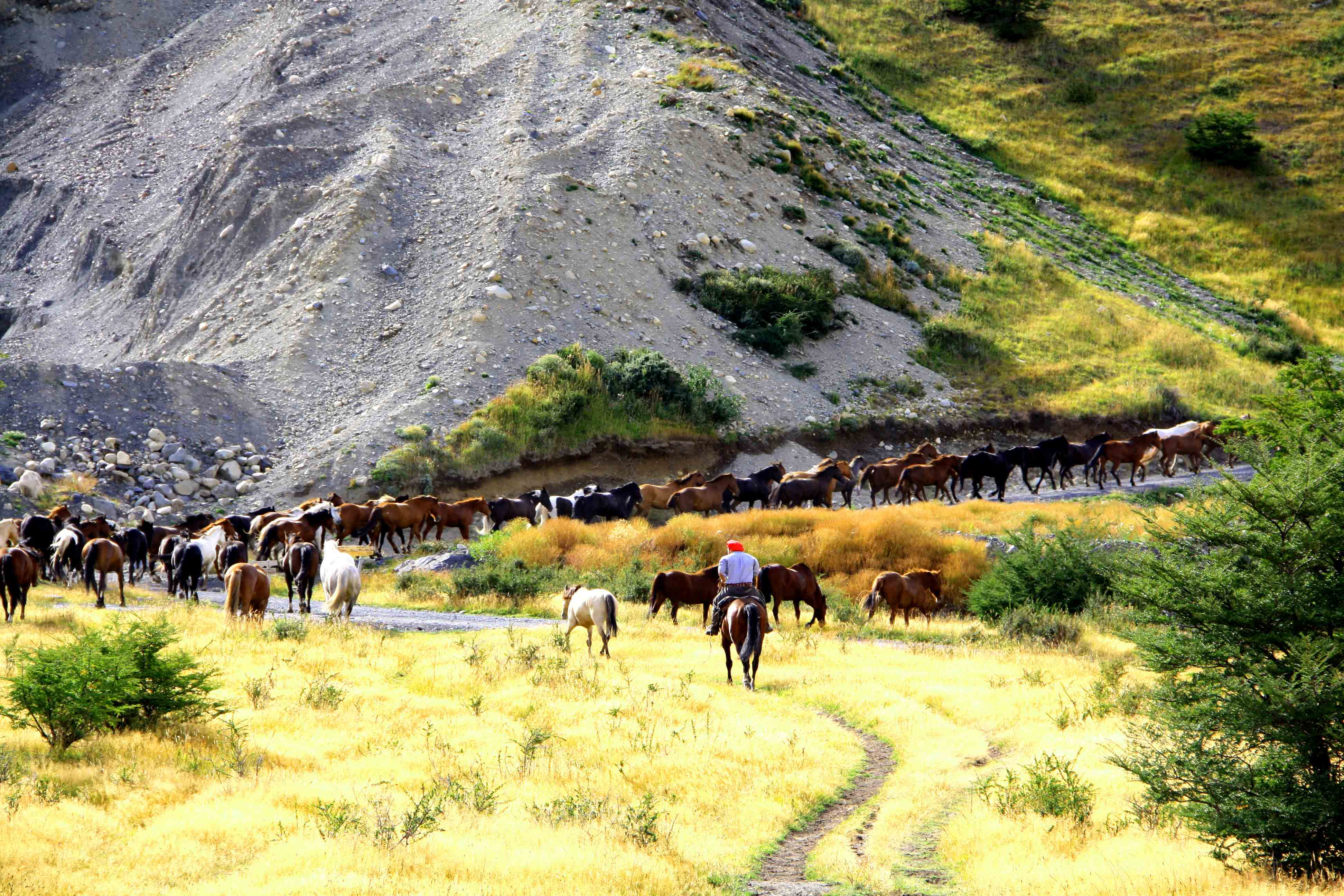 Gauchos torres del paine on their horses