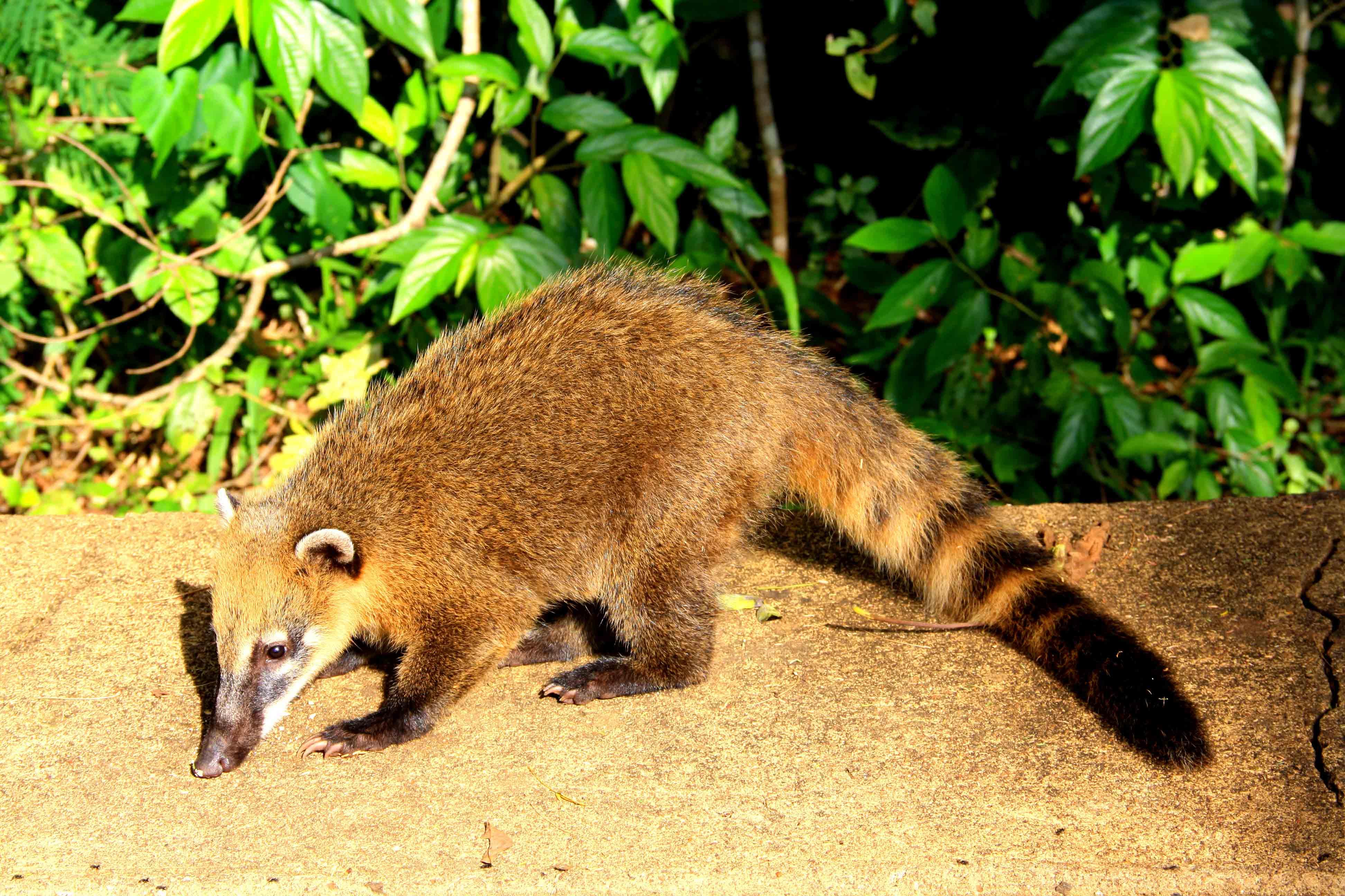 animal iguazu falls