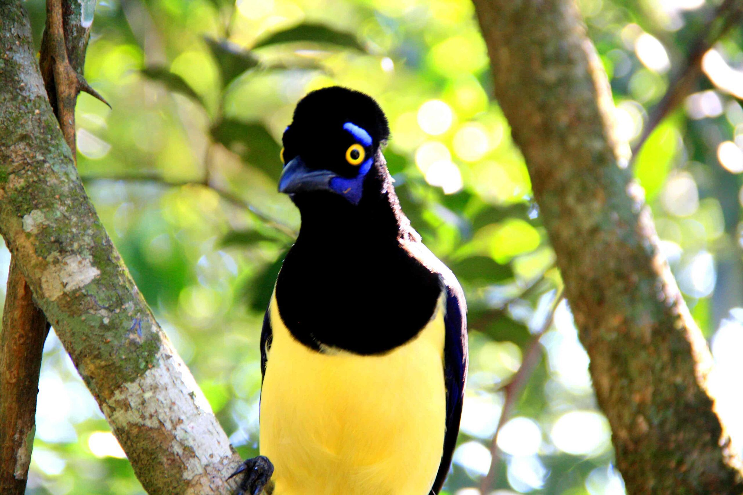 Colorful bird at Iguazu Falls in Argentina