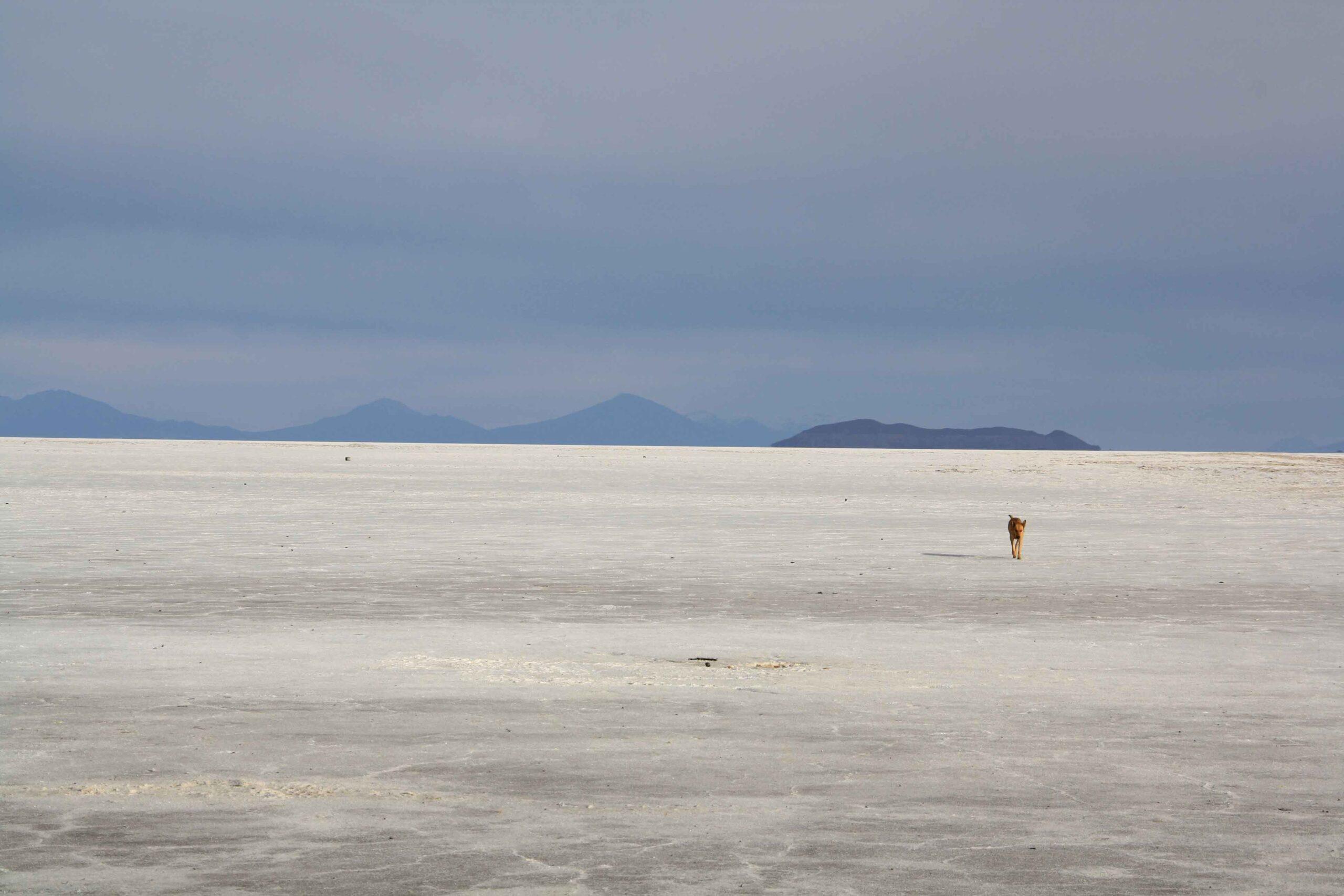 Dog on the Uyuni salt flats in Bolivia