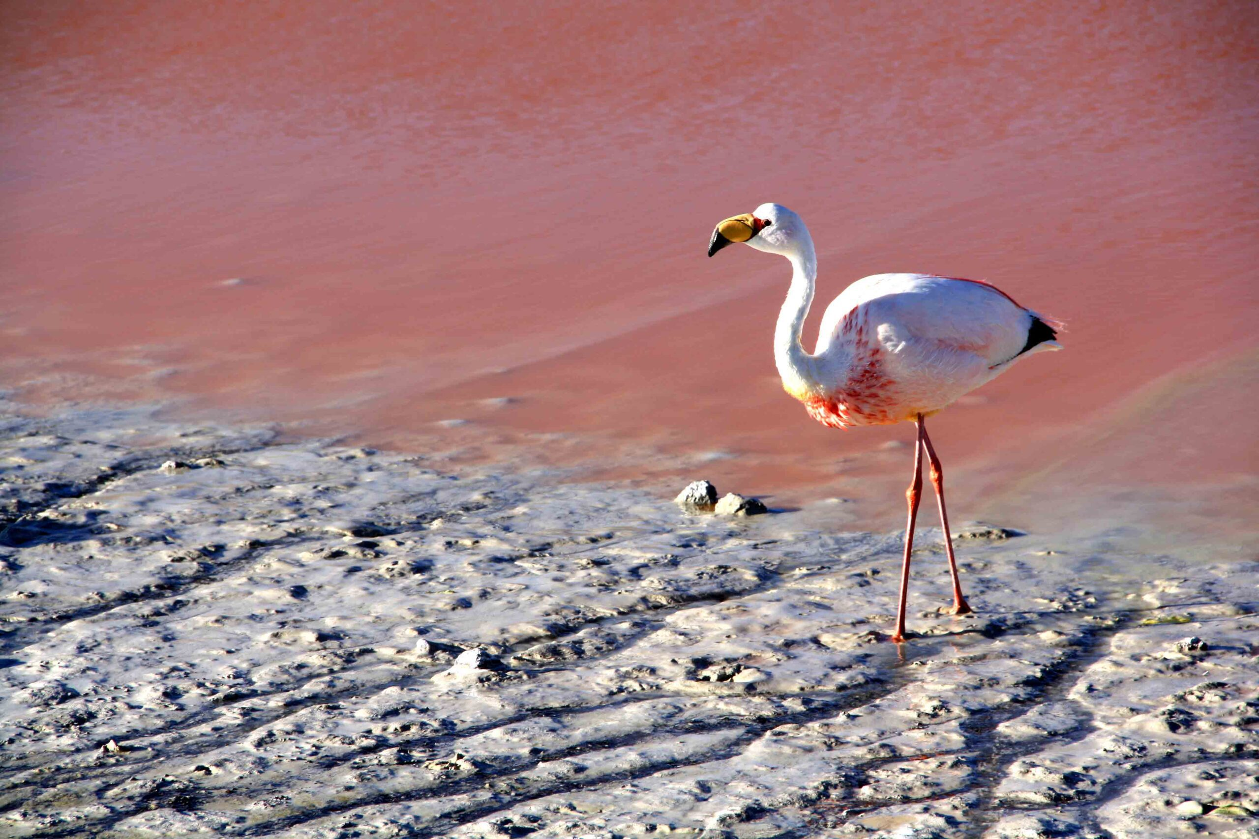 flamingo lake colorado uyuni tour