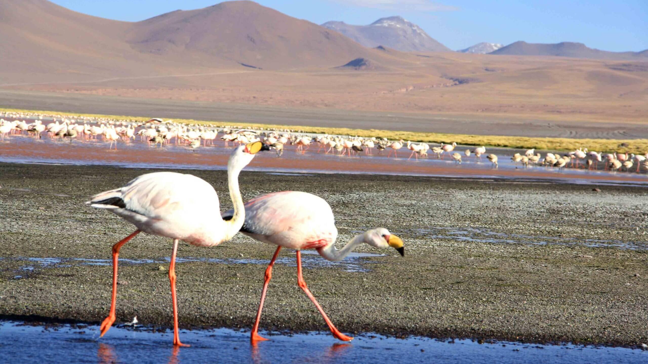 flamigos lake colorado view