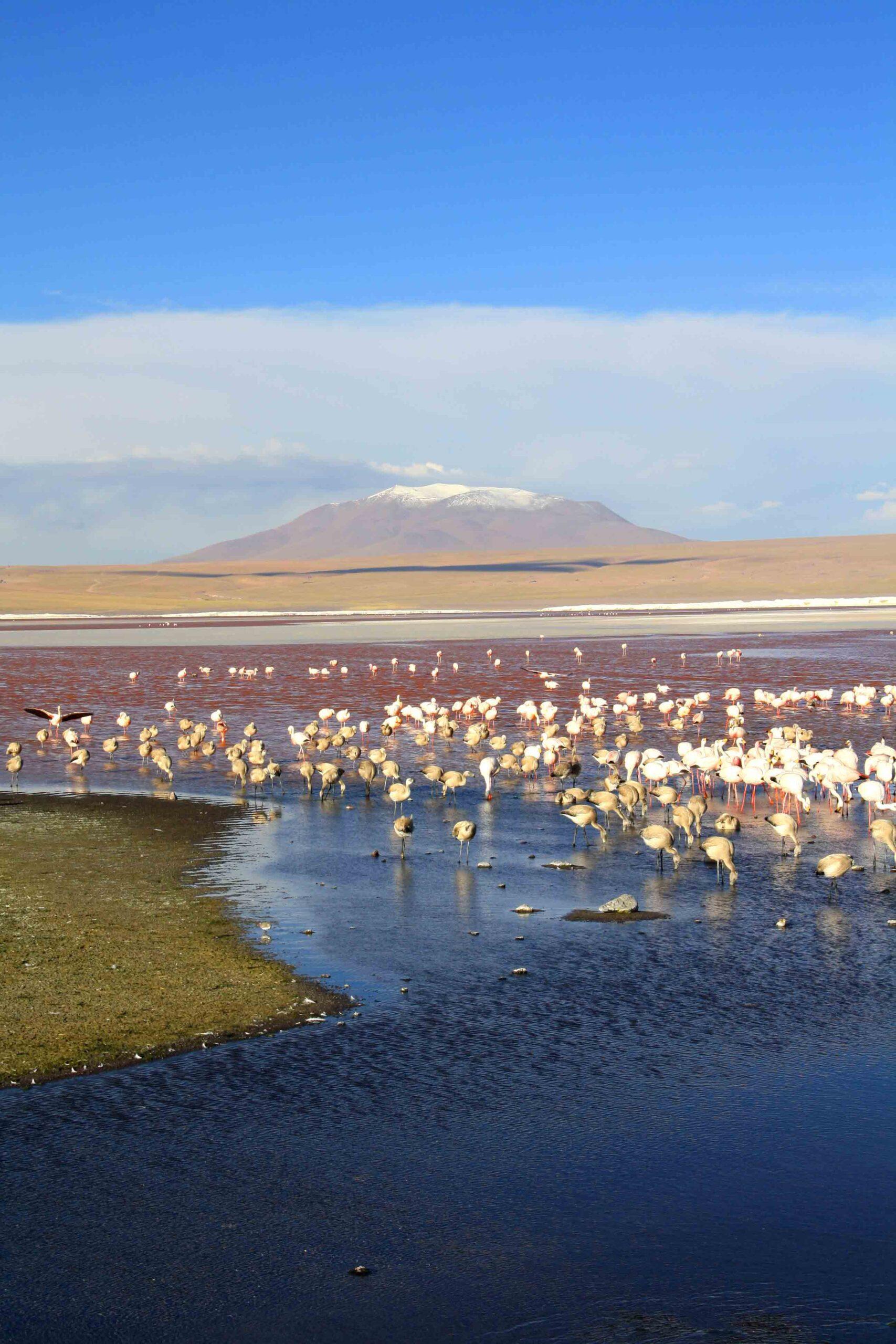 flamingos lake colorado uyuni
