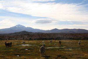 view lamas uyuni tour