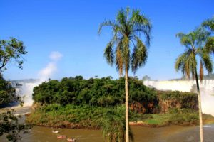 palmtrees iguazu falls view