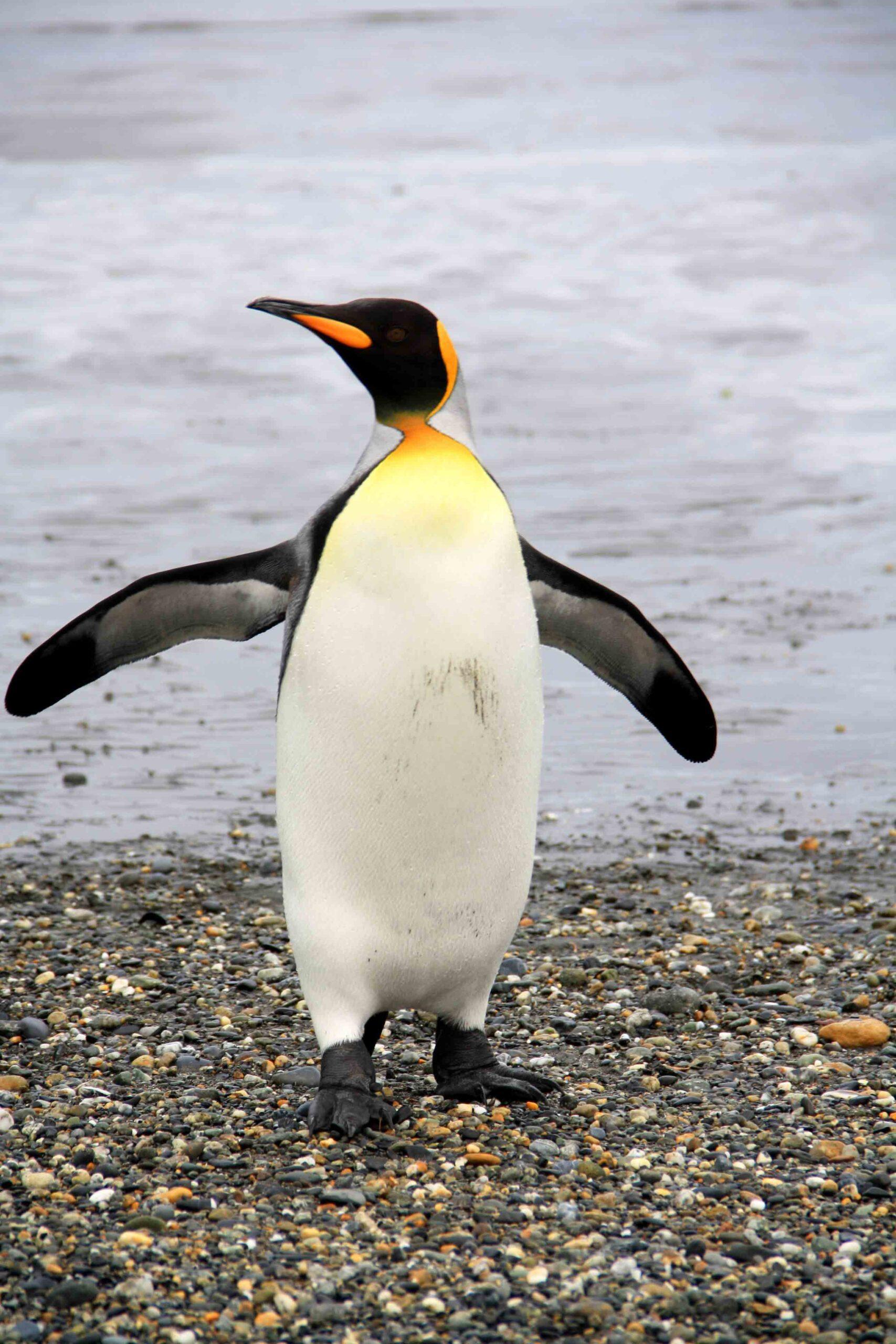 pinguin tierra del fuego national park