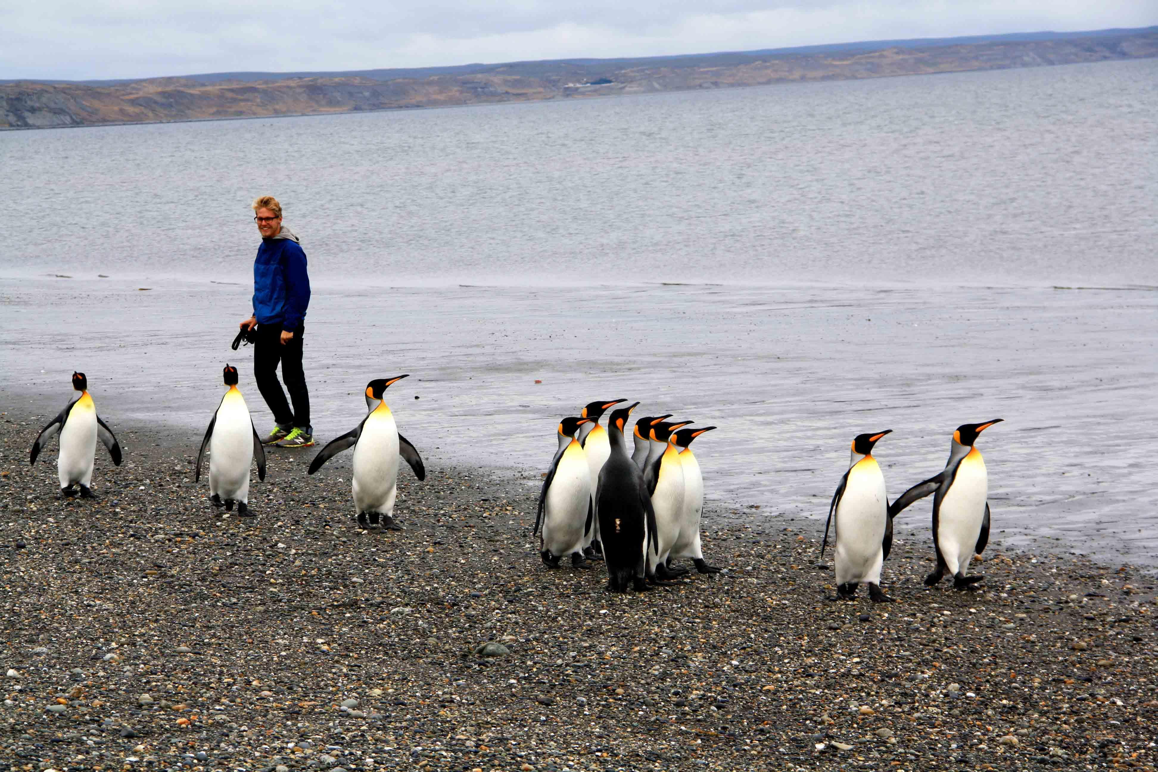 pinguins tierra del fuego national park