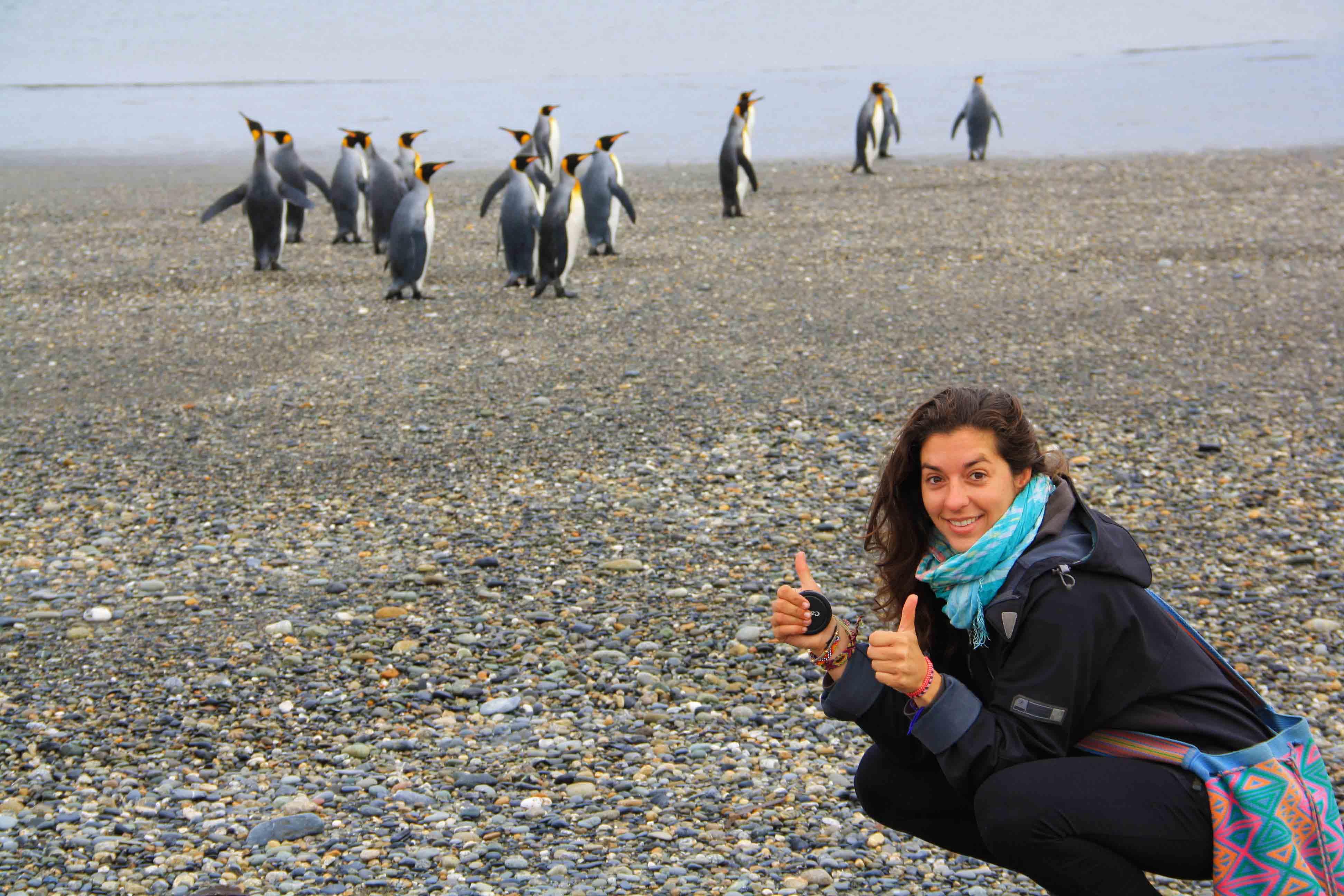 king pinguins tierra del fuego