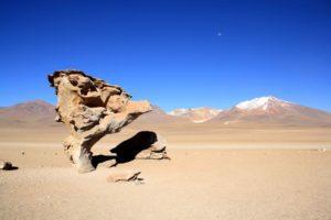 arbol piedra rock formations uyuni de salar tour