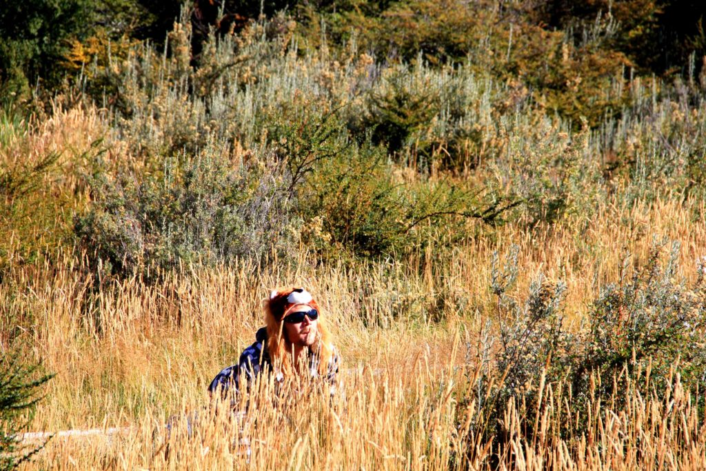 tierra del fuego high grass lion