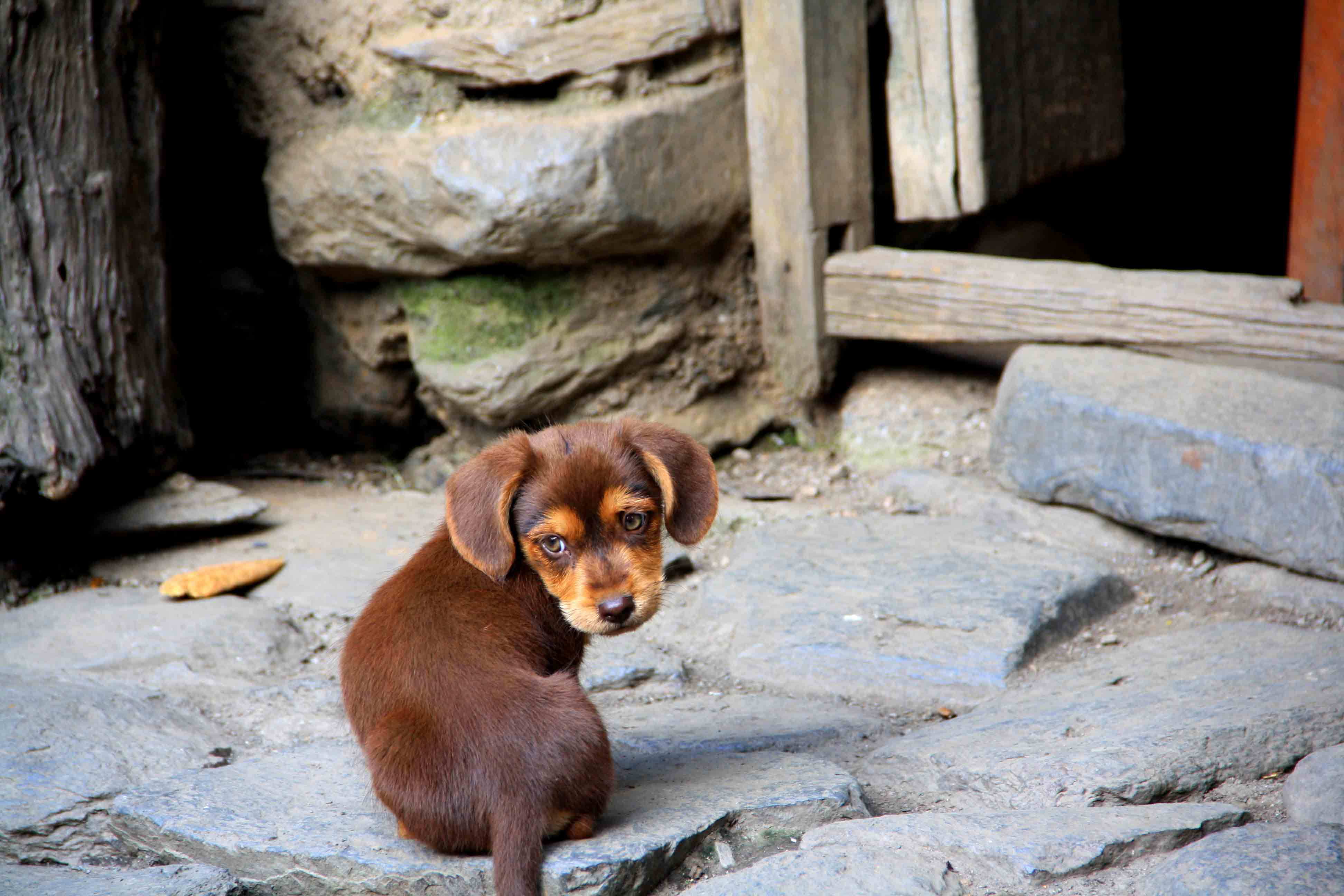 puppy dog inca jungle trail