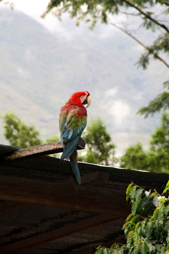 parrot inca jungle trail