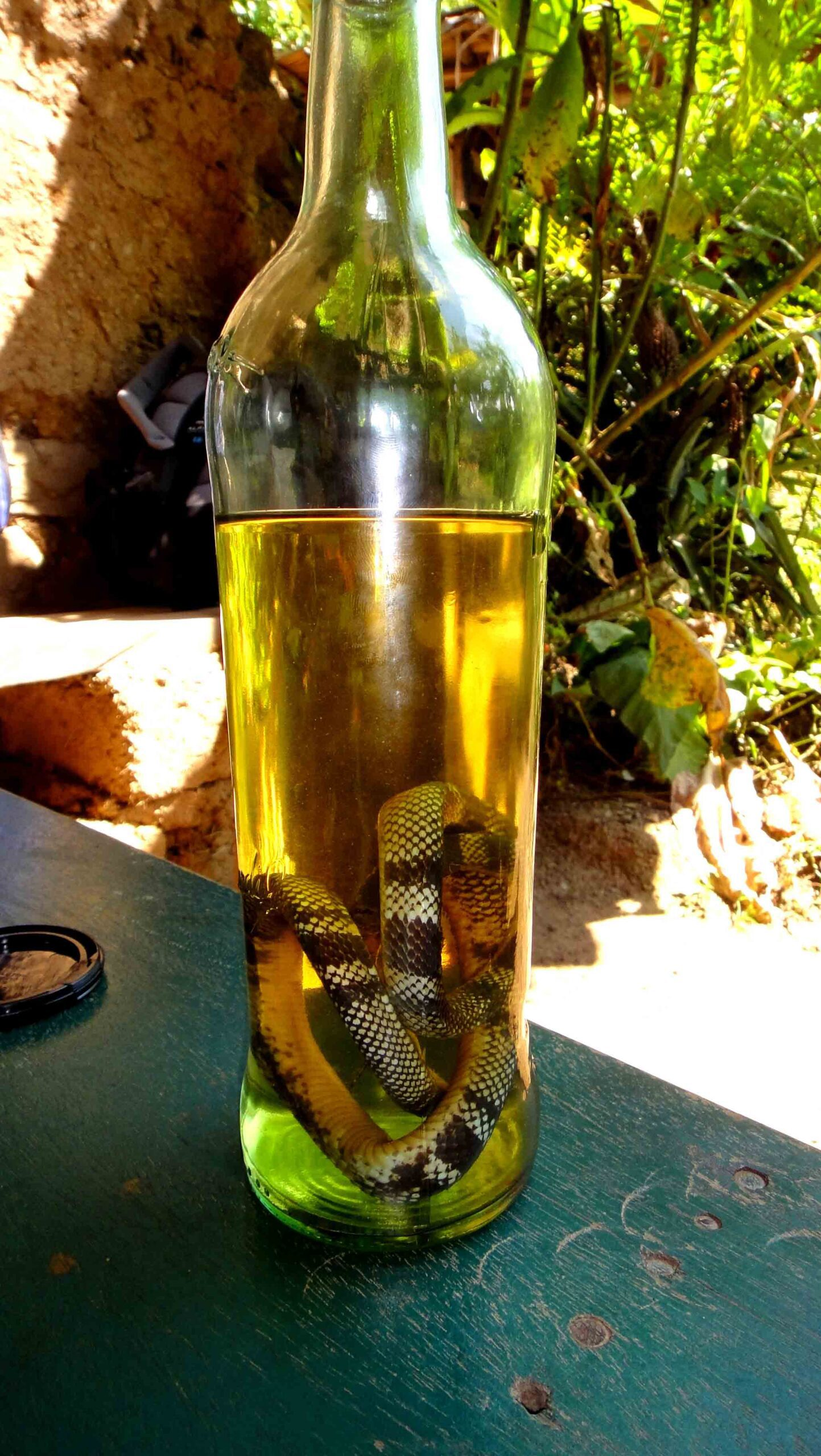 snake spirit inca jungle trail