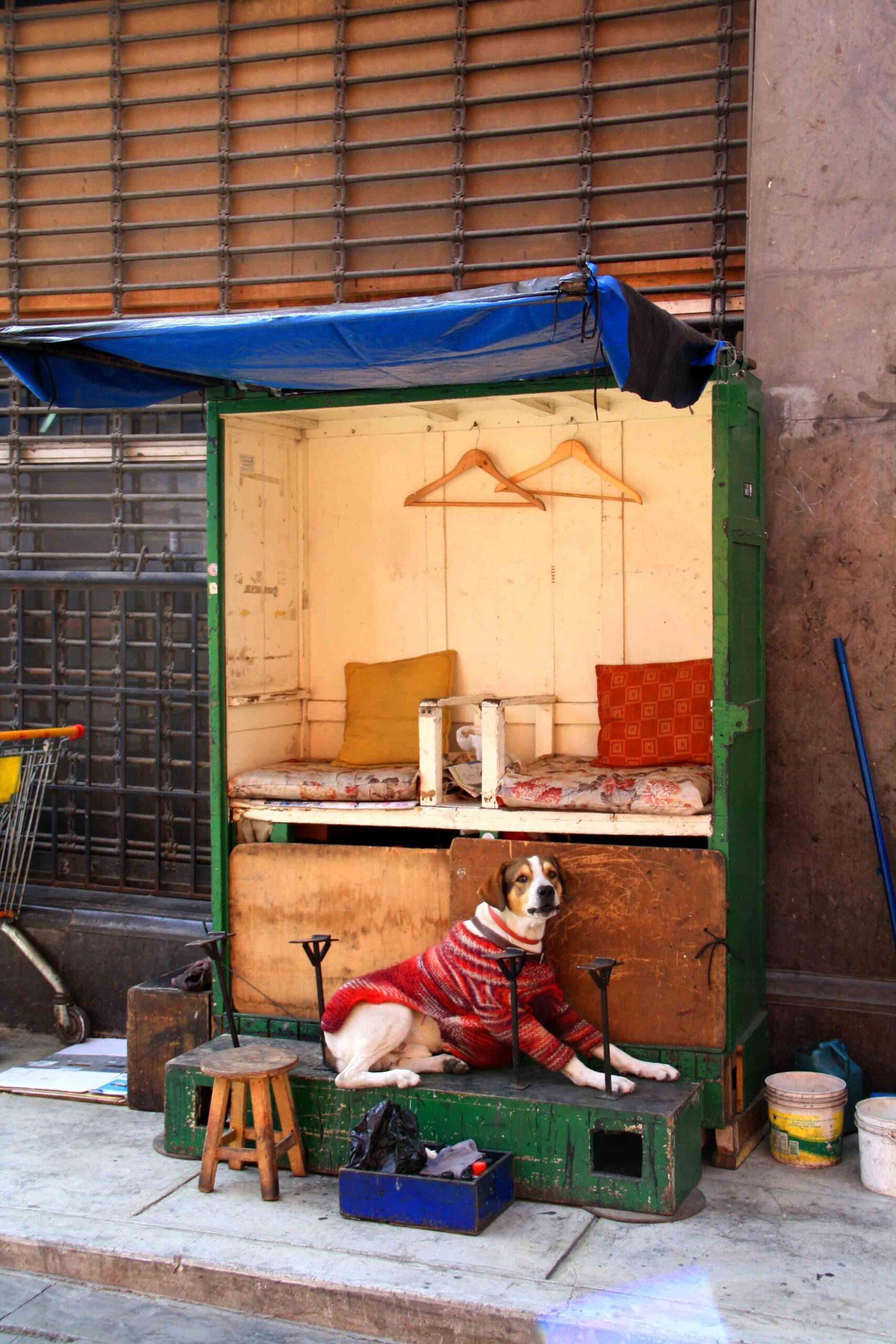 dog shoe polisher streets of lima