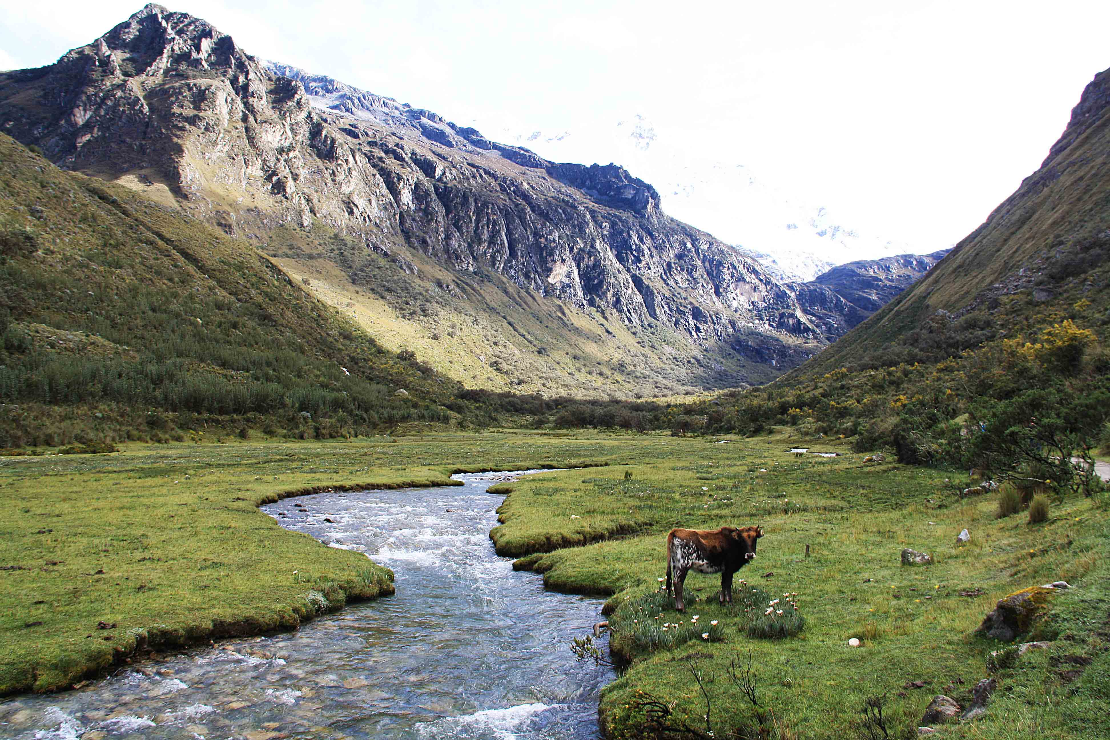 laguna 69 trekking cows view