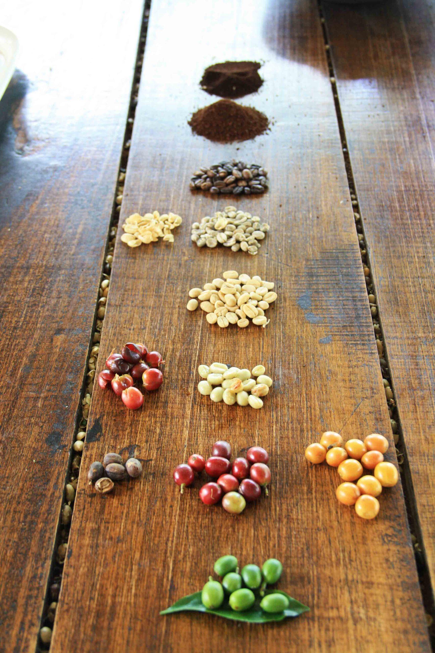 coffee bean process on the coffee farm