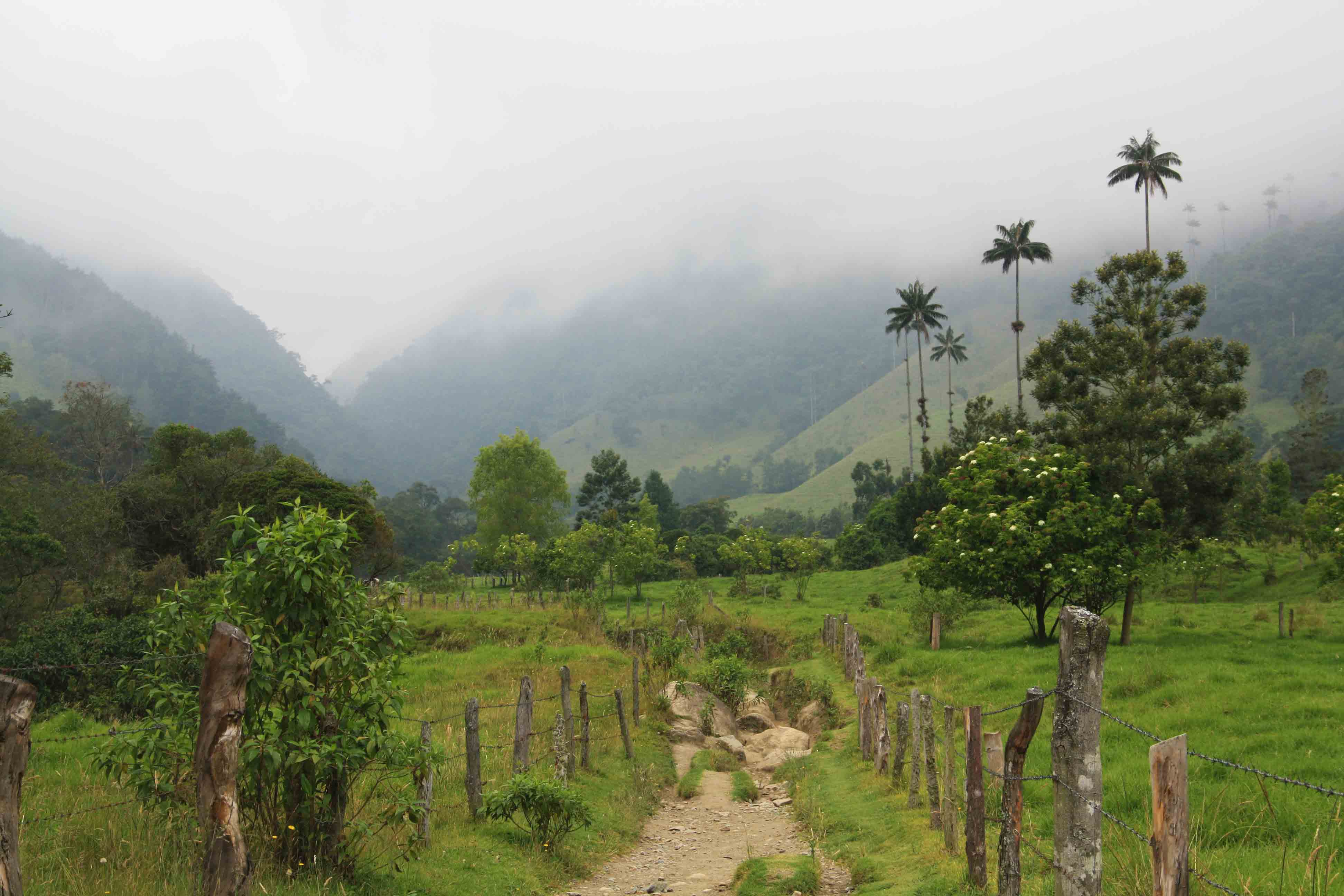 hiking the valle del cocora