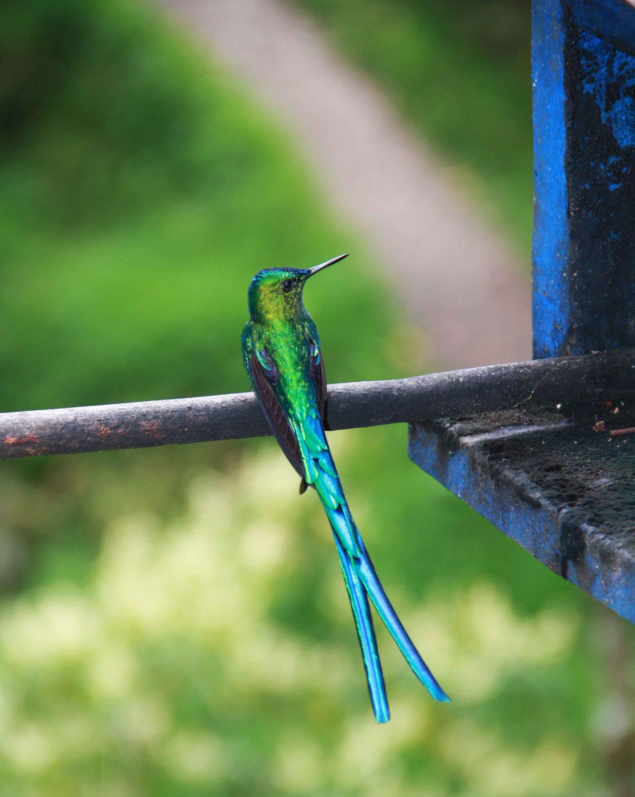 hummingbird farm Salento