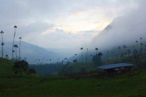 Misty Valle del Cocora in Salento Colombia