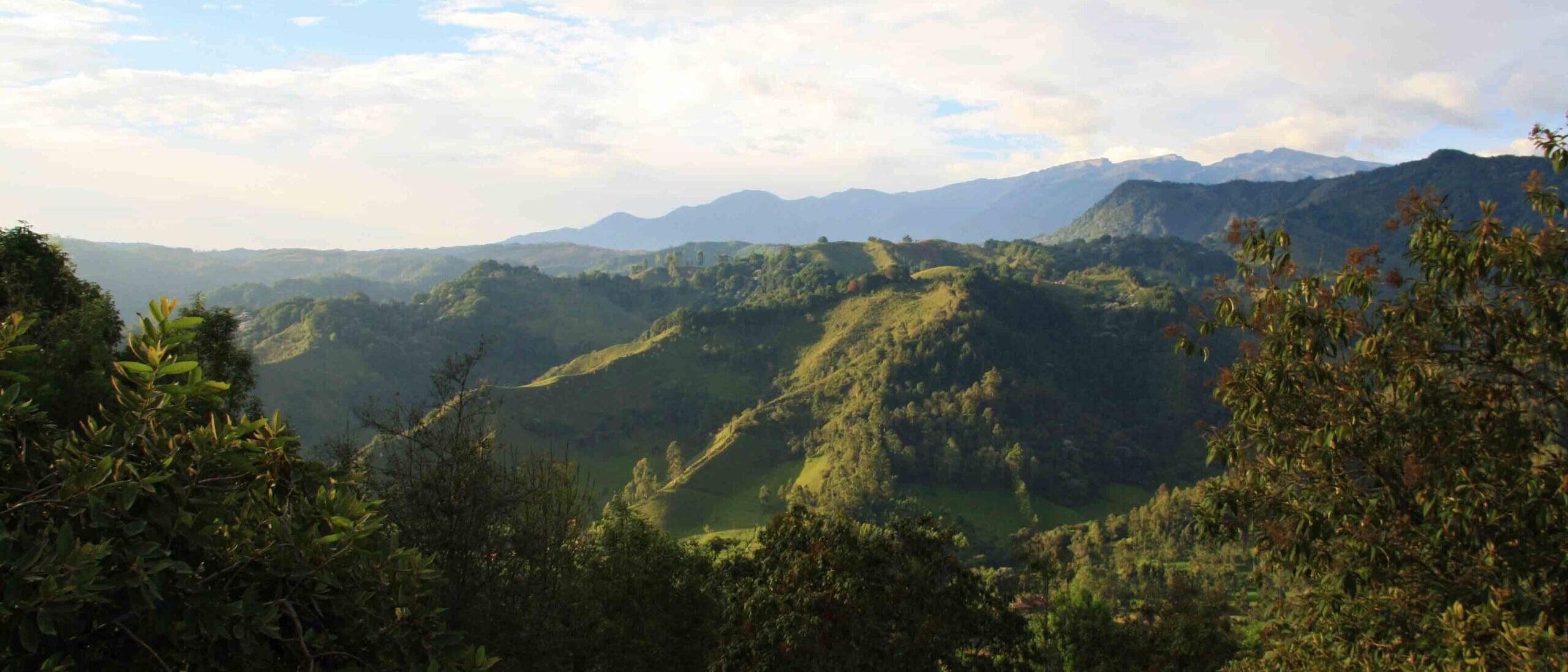 salento hills coffee region