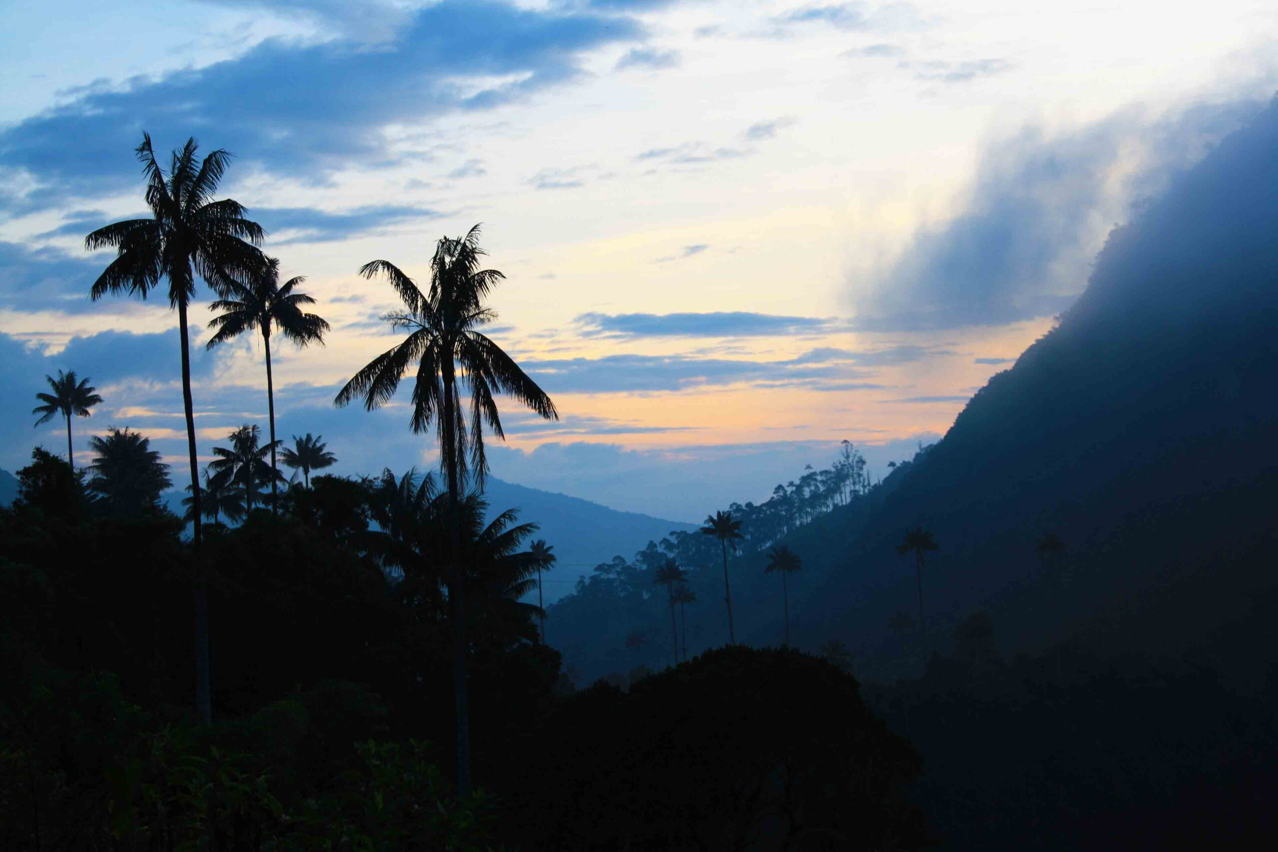 sunset valle del cocora in Colombia