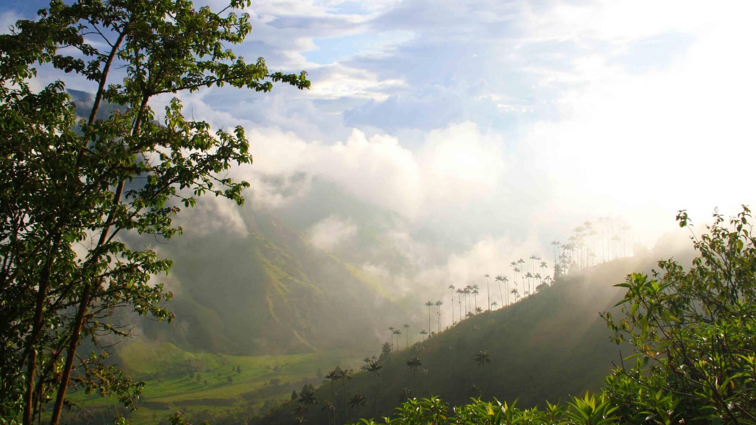 valle del cocora view in Salento Colombia