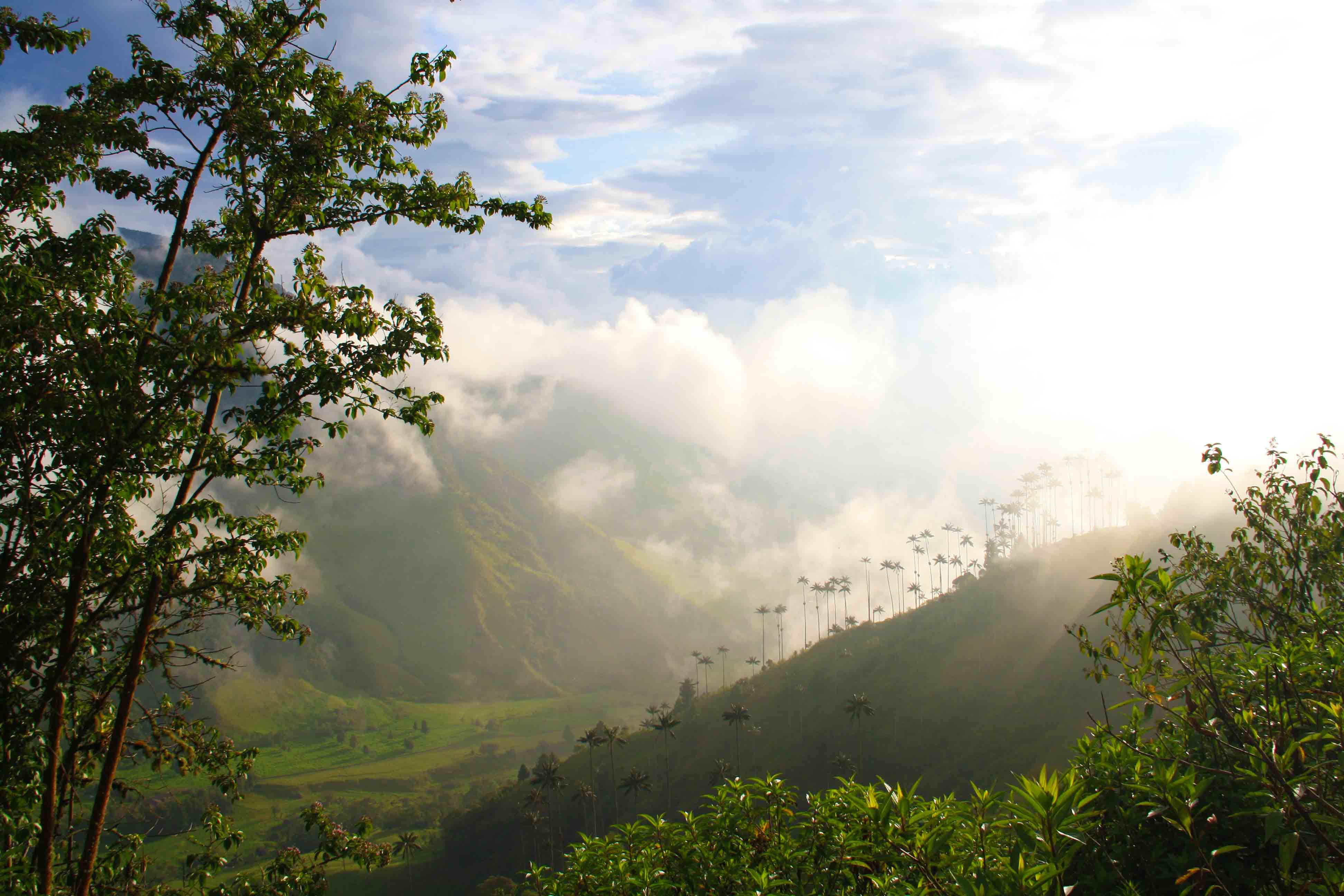 valle del cocora view