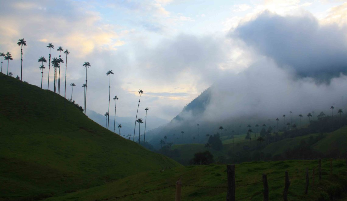 valle del cocora wax palms
