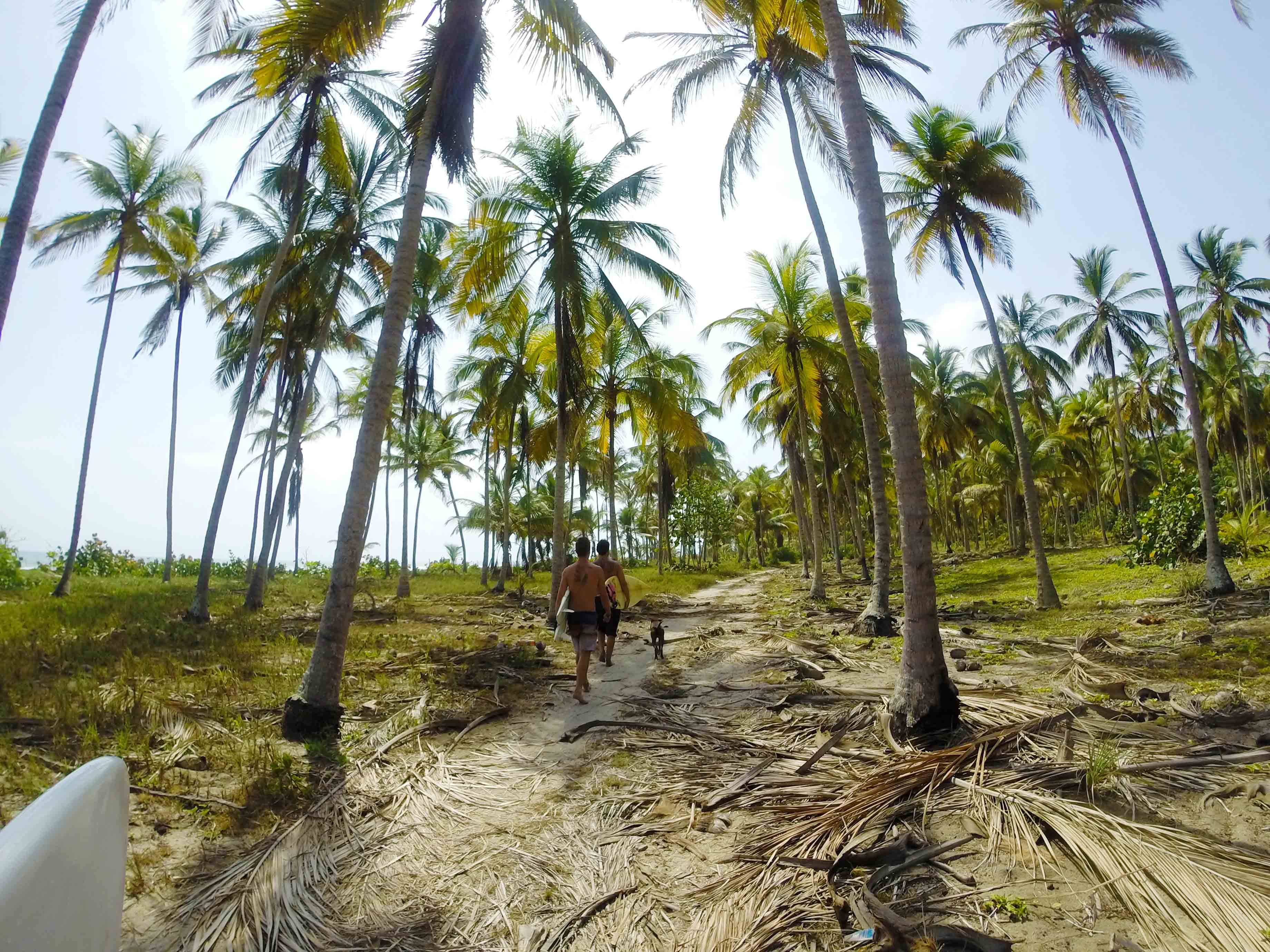 coconut farm walking for surfing at costeno beach