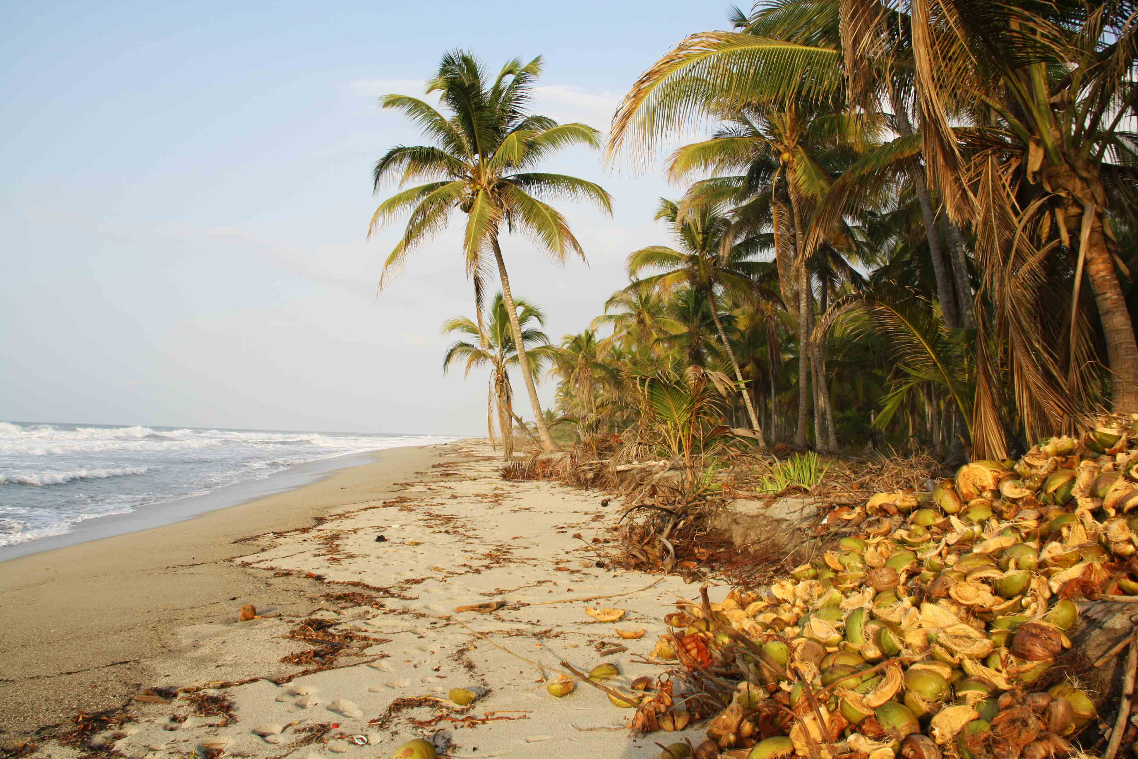 coconut farm costeno beach