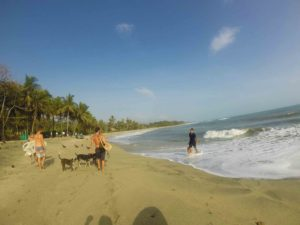 dogs surfing costeno beach