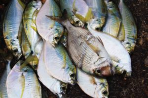 fresh fish on the Caribbean Coast of Colombia