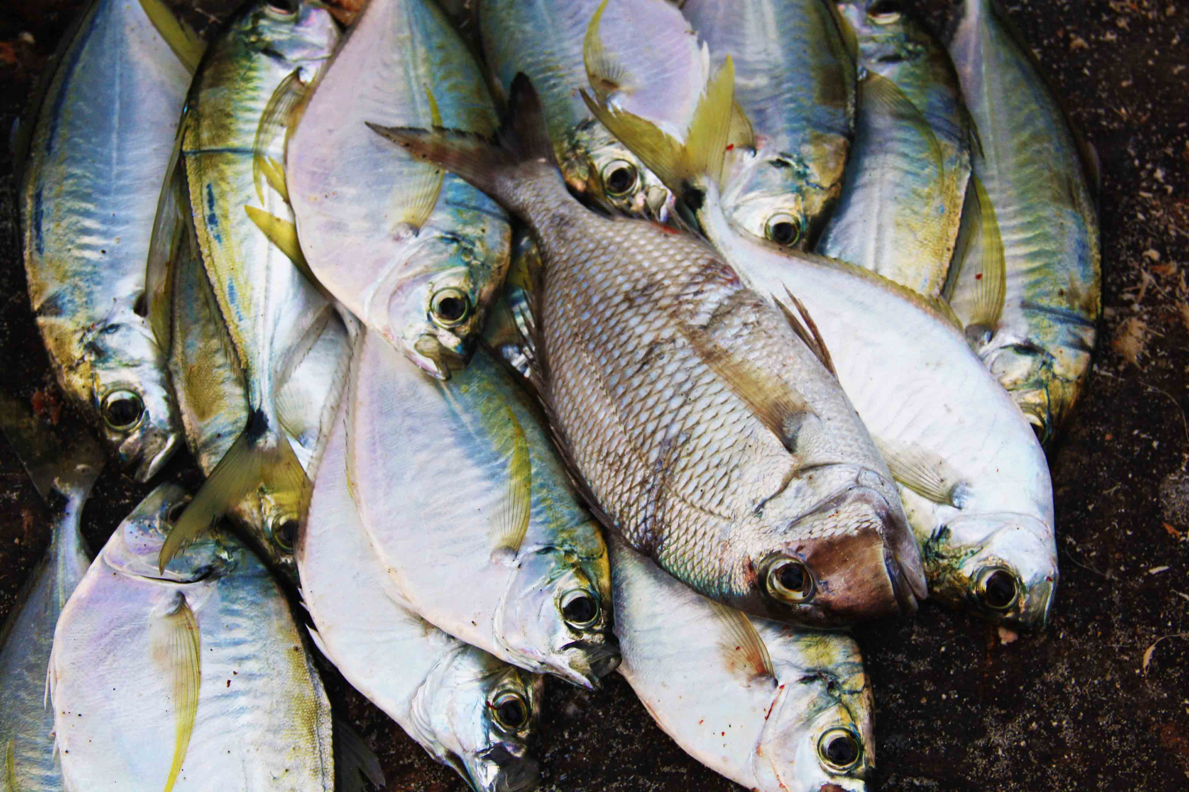 10 reasons why you should not miss out on coste o beach for The fresh fish company