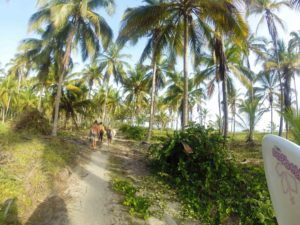 coconut farm at costeno beach