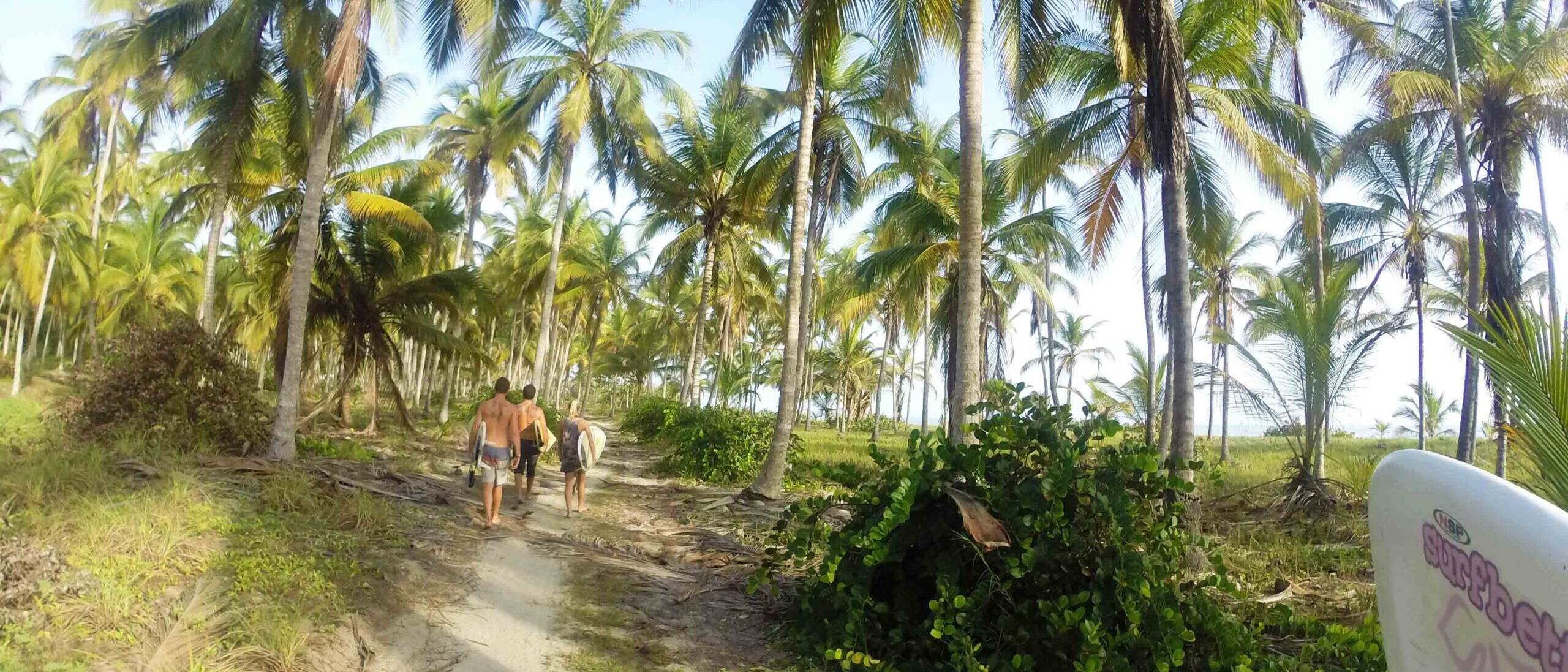 coconut farm at costeno beach