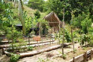 vegetable garden at rancho relaxo