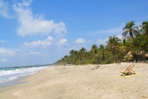 beach and jungle Palomino