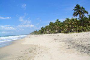 beach palomino jungle view