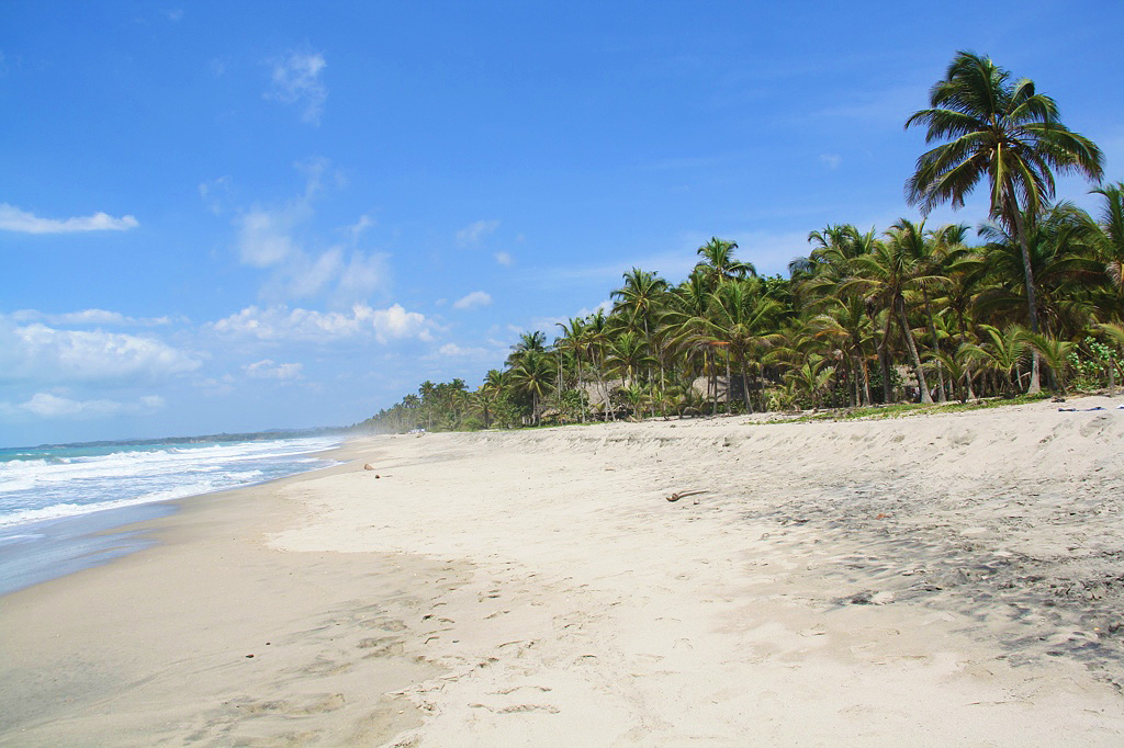 beach palomino jungle view