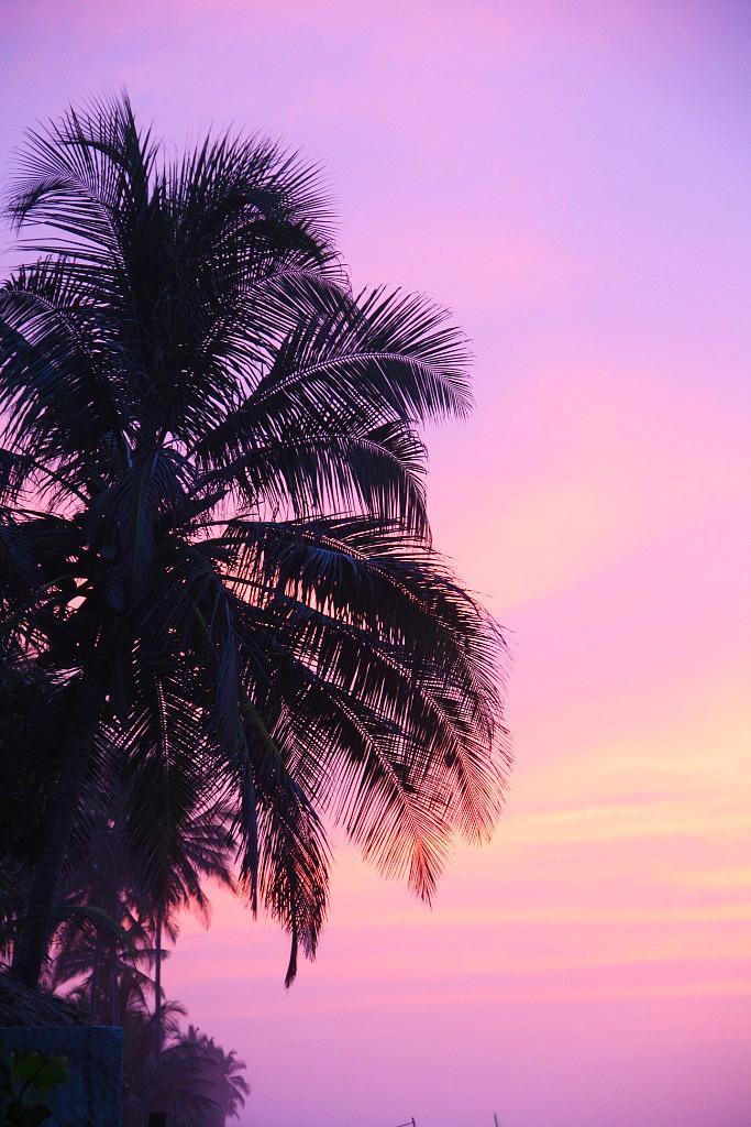sunset pink sky palmtrees palomino