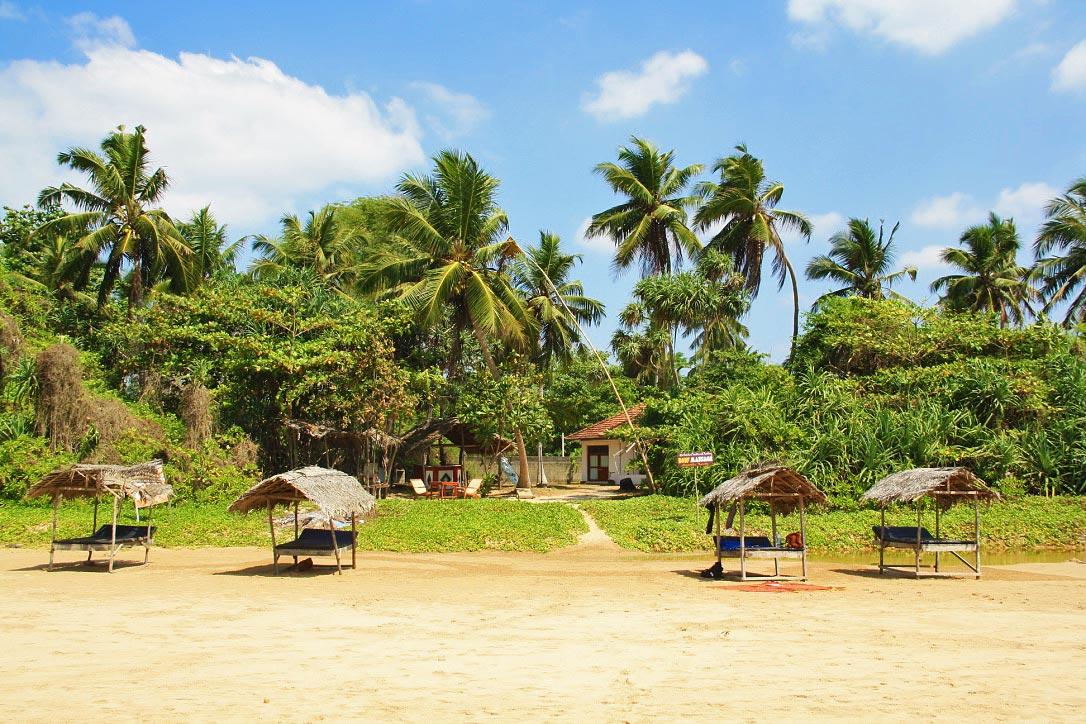 Talalla beach bungalows view palmtrees sri lanka