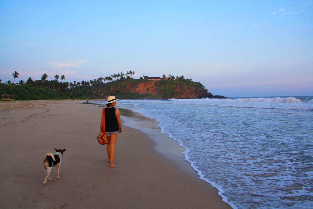 sunset beach walks dogs talalla sri lanka