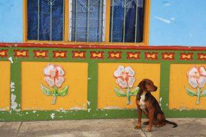 Guatape colors house dog