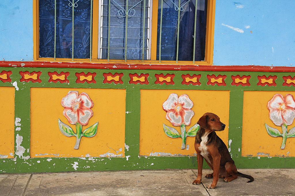 Guatape colors house dog