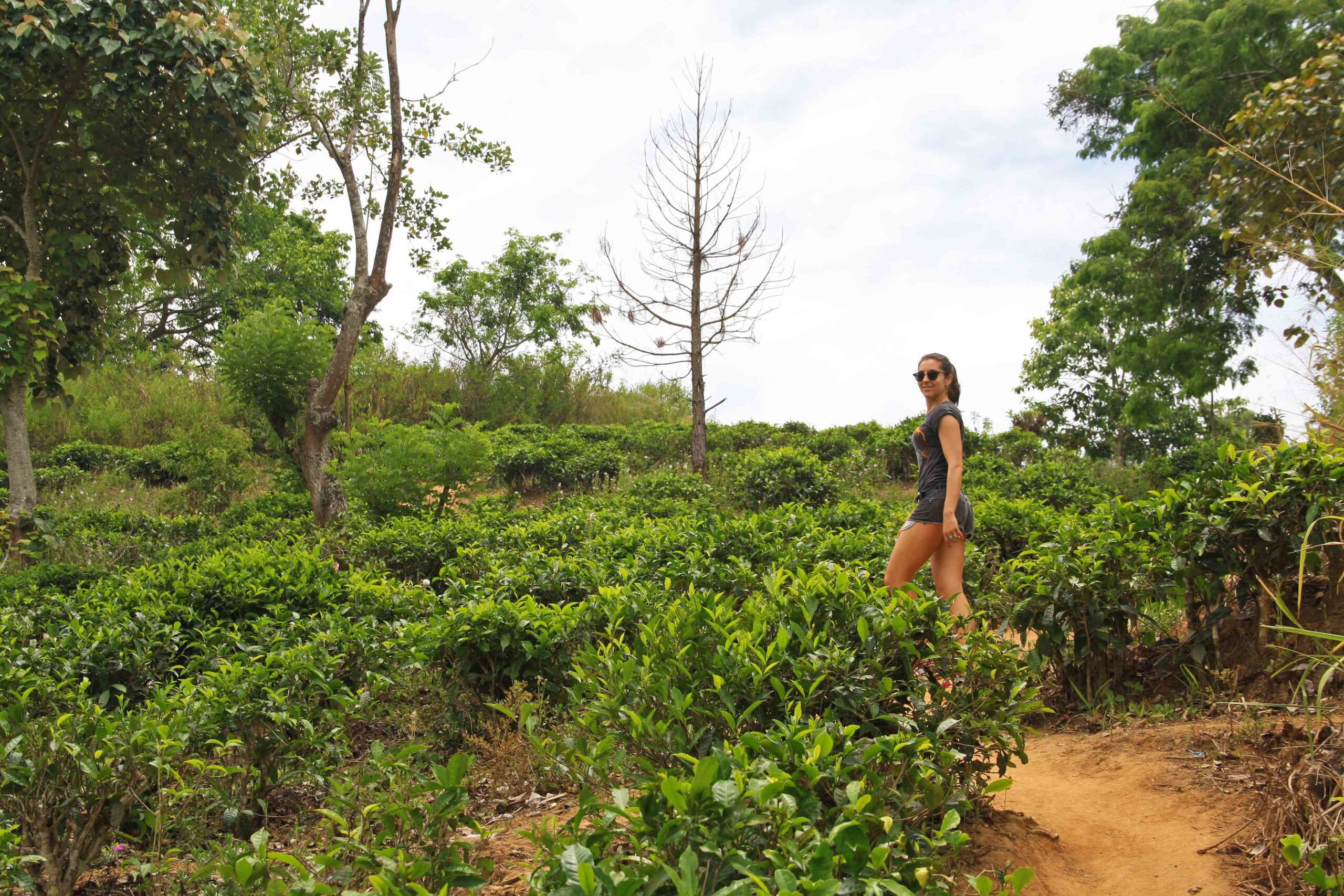 hiking ella rock tea plantation sri lanka