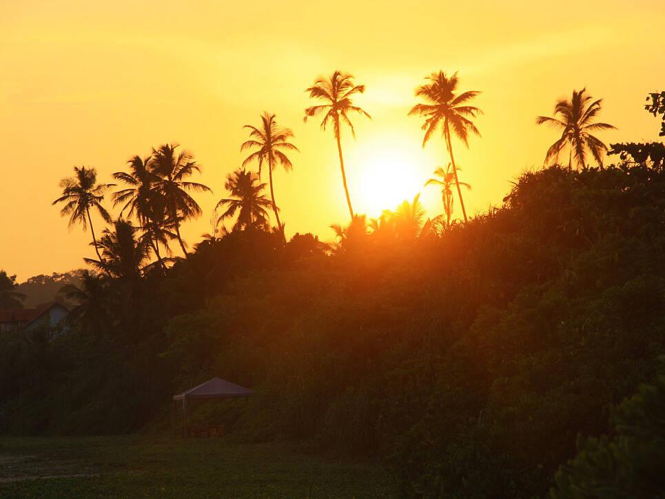 sunset talalla beach palmtrees sri lanka