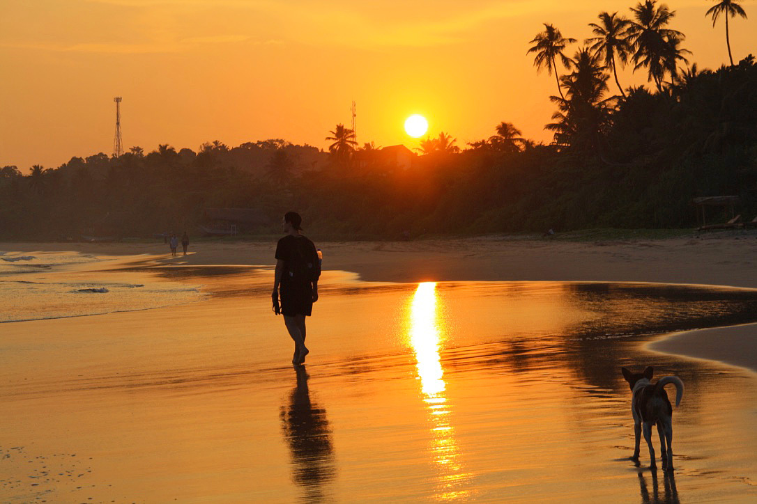 sunset walks dogs talalla beach sri lanka